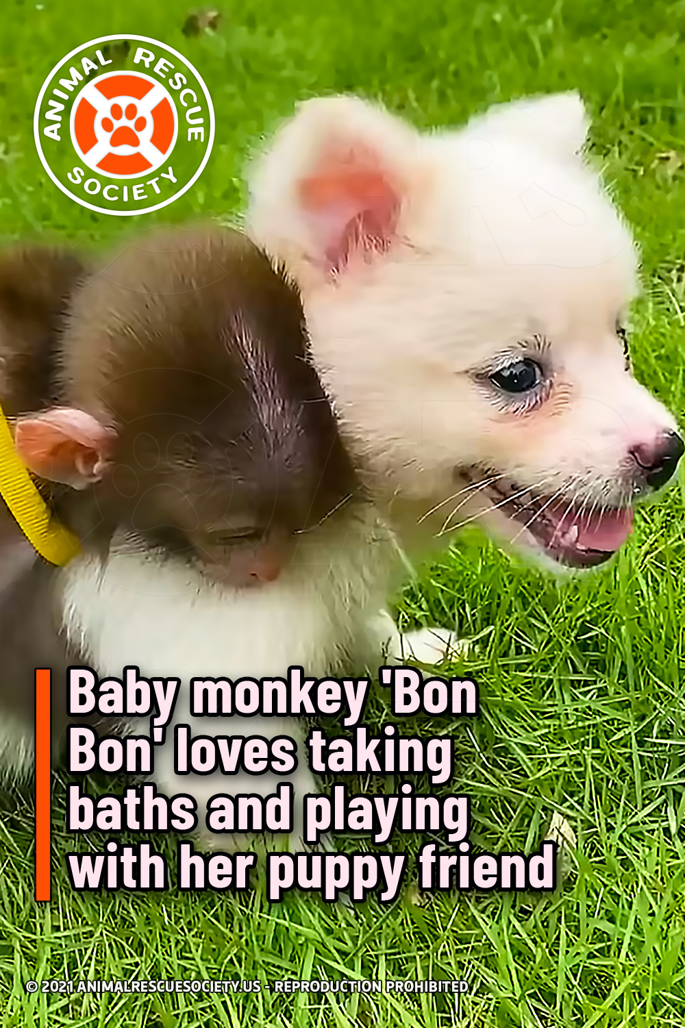 Baby monkey \'Bon Bon\' loves taking baths and playing with her puppy friend