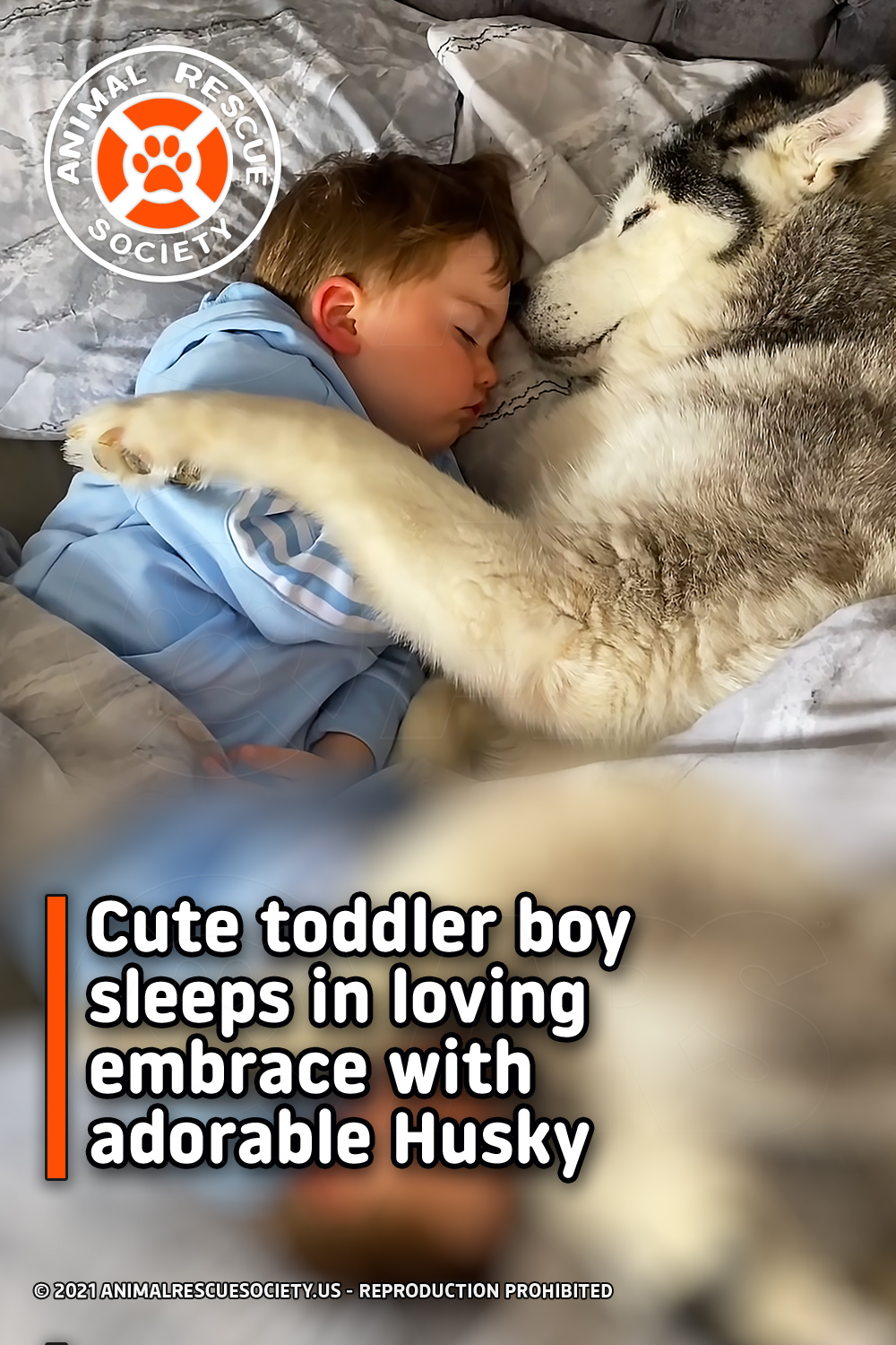 Cute toddler boy sleeps in loving embrace with adorable Husky